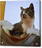 Cat In The Roof Acrylic Print