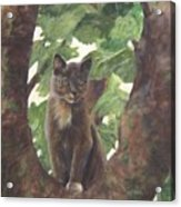 Cat In Tree Acrylic Print