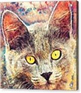 Cat Kiara Acrylic Print