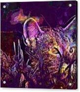 Cat Kitten Mieze Tiger Cat  Acrylic Print