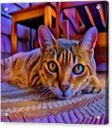 Cat Laying On Braided Rug Acrylic Print