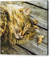 Cat Lie Wood Floor Acrylic Print