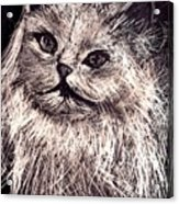 Cat Life Acrylic Print by Leonor Shuber