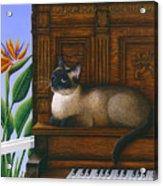 Cat Missy On Piano Acrylic Print