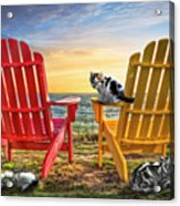Cat Nap At The Beach Acrylic Print by Debra and Dave Vanderlaan