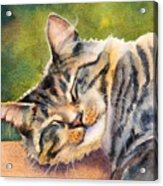 Cat Nap Acrylic Print