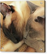 Cat Nap With Toby And Sadi Acrylic Print