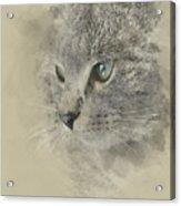 Cat, Nikita Il Gatto. Acrylic Print