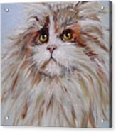 Cat Of Many Colors Acrylic Print