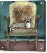 Cat On A Chair Acrylic Print