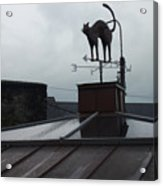 Cat On A Cool Tin Roof Acrylic Print