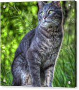 Cat On A Post Acrylic Print