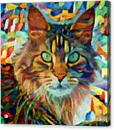 Cat On Colors Acrylic Print