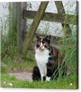 Farm Cat On Duty Acrylic Print
