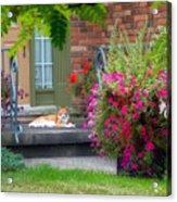 Cat On Porch Acrylic Print