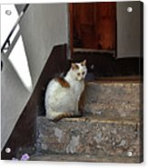Cat On Steps Acrylic Print