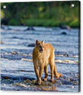 Cat On The River Acrylic Print