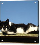 Cat On The Roof Acrylic Print