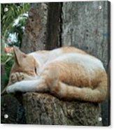 Cat On The Tree Acrylic Print