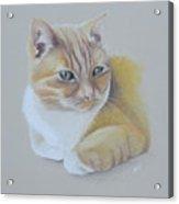 cat portrait - Astra Acrylic Print
