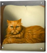 Cat Portrait Of Tosca Acrylic Print