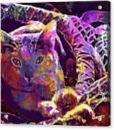 Cat Purr Kitten Pet Fur Feline  Acrylic Print