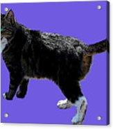 Cat Says Acrylic Print