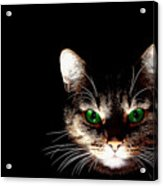 Cat Shadow Acrylic Print