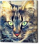 Cat Simba Acrylic Print