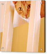 Cat Spy Acrylic Print