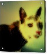 Cat Acrylic Print by Steven Digman