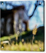 Cat Tail Acrylic Print