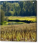 Cat Tails In The Sun Acrylic Print
