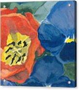 Cat Tulip Acrylic Print