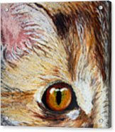 Cat Visions Acrylic Print by Lorraine Foster