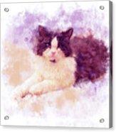 Cat Watercolor Acrylic Print