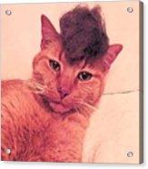 Cat Wearing A Wig Acrylic Print