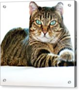 Cat With Bright Eyes Acrylic Print