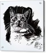 Cat With Ink Acrylic Print