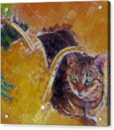 Cat With Watering Can Acrylic Print