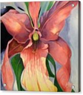 Catalya Orchid Acrylic Print
