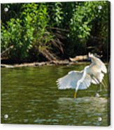 Catch Of The Day Series - 1 Acrylic Print