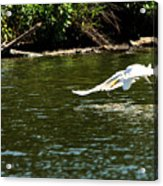 Catch Of The Day Series - 2 Acrylic Print