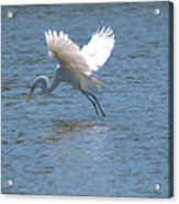 Catch Of The Day Series - 3 Acrylic Print