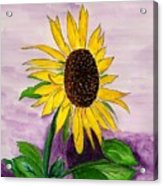 Catching A Sunflower  Acrylic Print