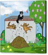 Tabby Cats Falling Acrylic Print