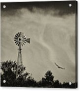 Catching The Updraft Acrylic Print