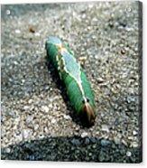 Caterpillar 3 Acrylic Print
