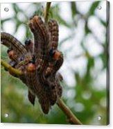Caterpillar Group Hug Acrylic Print