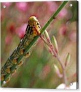 Caterpillar Munching Acrylic Print